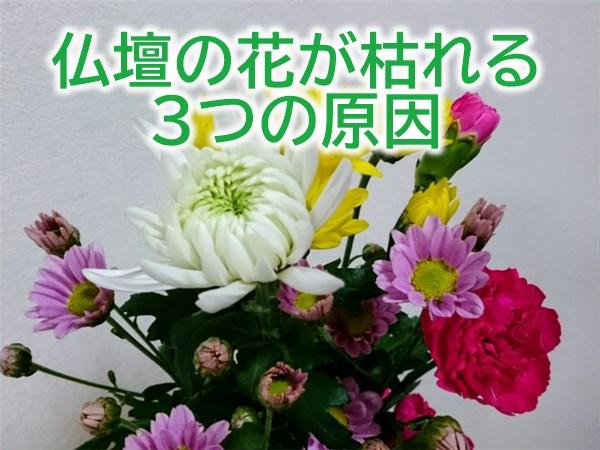 仏壇の花が枯れる3つの原因