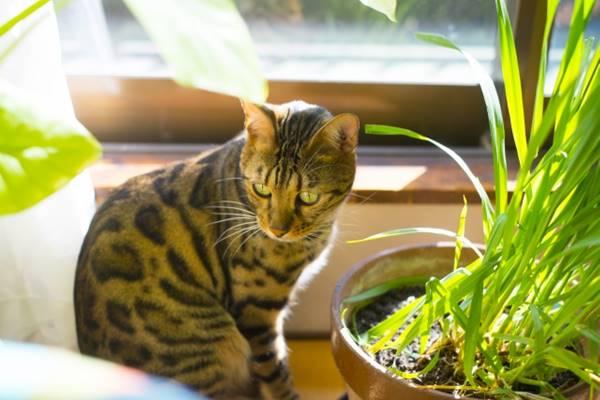 縞猫と猫草